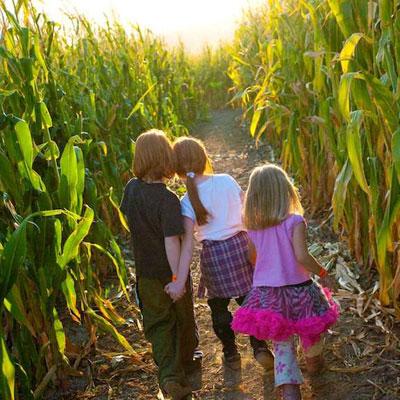 Quex maize maze and field of fun at Quex Activity Centre, Thanet