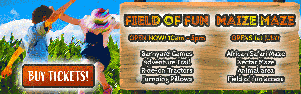 field-of-fun-banner-3