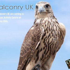 Falconry - May 29th
